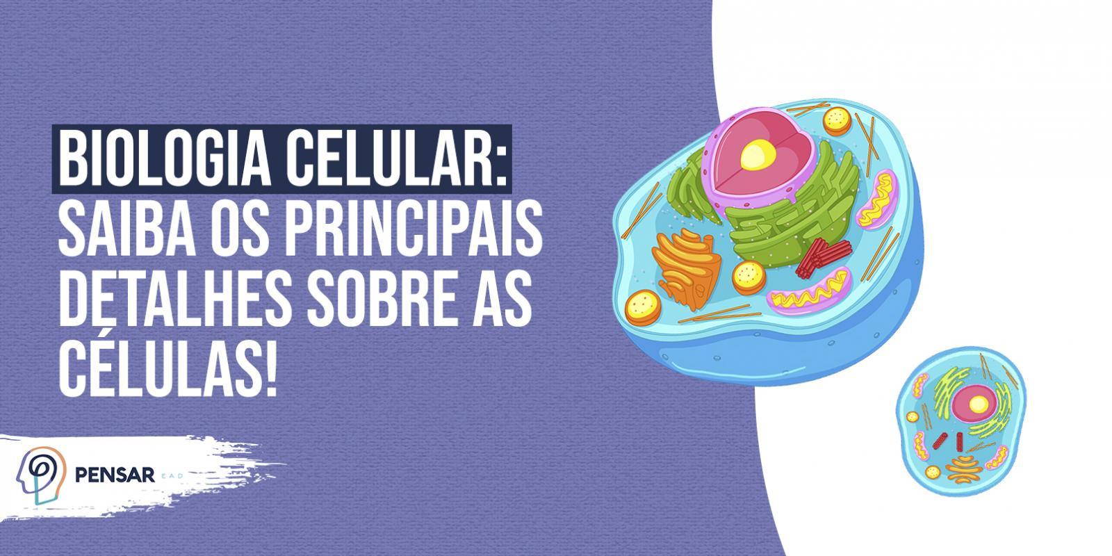 Biologia Celular: saiba os principais detalhes sobre as células!