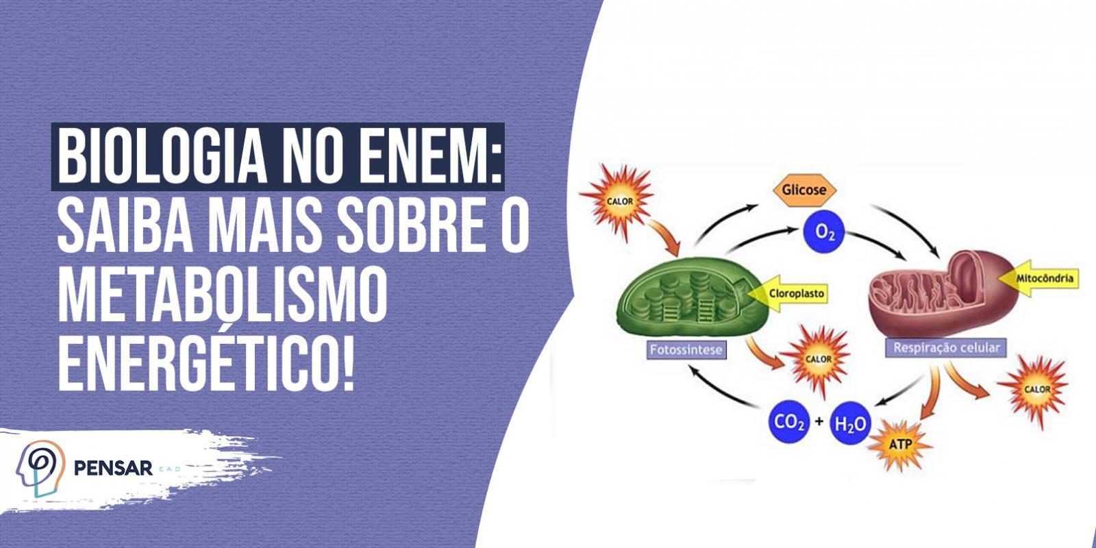 Biologia no ENEM: saiba mais sobre o metabolismo energético!